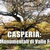 Casperia: i Cerri monumentali di Valle Ferrara