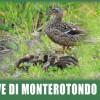 Cave di Monterotondo Scalo: Monumento Naturale