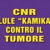 CNR: cellule 'kamikaze' contro il tumore