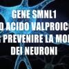 Gene Smnl1 ed Acido Valproico per prevenire la morte dei neuroni