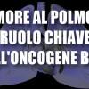 Tumore al polmone: ruolo chiave dell'oncogene Bmi1
