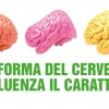 La forma del cervello influenza il carattere