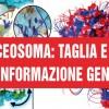 Spliceosoma: il 'taglia e cuci' dell'informazione genetica
