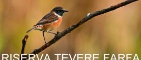 Riserva Tevere Farfa … un magnifico percorso fluviale