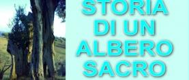 """Storia di un albero """"sacro"""""""