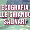 Ecografia delle Ghiandole Salivari
