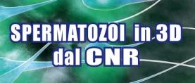 CNR: Spermatozoi in 3D per studiare l'infertilità