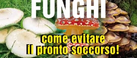 Funghi: come evitare il pronto soccorso !