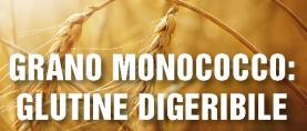 Grano monococco: glutine digeribile