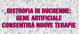 Distrofia di Duchenne: gene artificiale consentirà nuove terapie