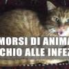Morsi di animali: occhio alle infezioni