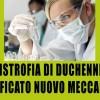 Distrofia muscolare di Duchenne: identificato nuovo meccanismo