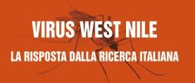 Virus West Nile: la risposta dalla ricerca italiana