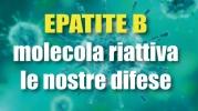 Epatite B: una molecola riattiva le difese dell'organismo