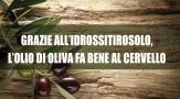 Grazie all'idrossitirosolo, l'olio di oliva fa bene al cervello