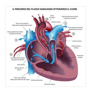 soffio al cuore soffio cardiaco