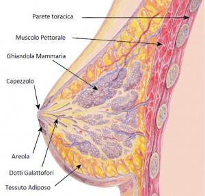 seno chirurgia plastica