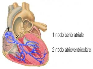 cuore palpitazioni aritmie