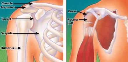 cuffia della spalla cuffia dei rotatori