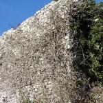 10 Mura Esterne Castello di Castiglione Palombara