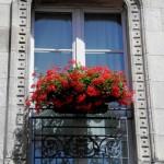 La Rochelle - Finestra con geranei