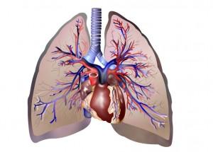 polmoni enfisema polmonare bronchite