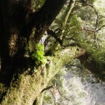Casperia - Valle Ferrara - Foresta 3