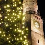 Innsbruck - La Torre e l'Albero