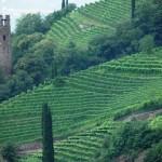 Castel Roncolo - I Vigneti