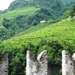 Castel Roncolo - I Vigneti 2
