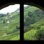 Castel Roncolo - I Vigneti 3