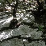 rocca tancia