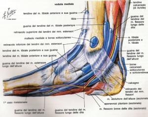 caviglia distorsione della caviglia
