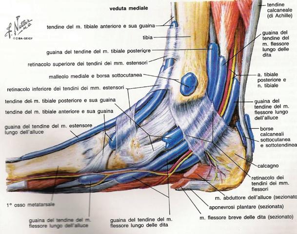caviglia distorsione della caviglia tendine d'achille tallonite