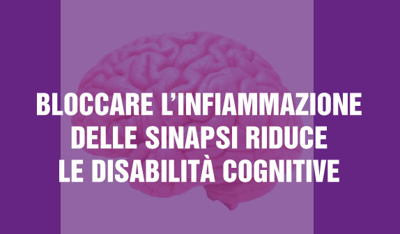 Bloccare l'infiammazione delle sinapsi riduce le disabilità cognitive