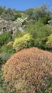 Domus de Janas Montessu necropoli villaperuccio carbonia sardegna