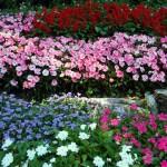 giardino botanico villa carlotta lago di como tremezzo