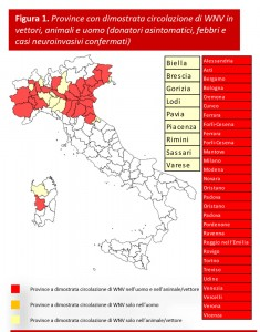 west nile virus febbre west nile italia zanzare contagio