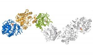 metastasi tumorali enzima lh3 collagene